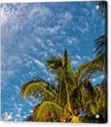 8156- Palm Tree Acrylic Print