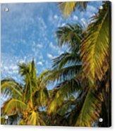 8167- Palm Tree Acrylic Print