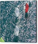 Key West Race Week Acrylic Print