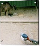 Australian Native Animals Acrylic Print