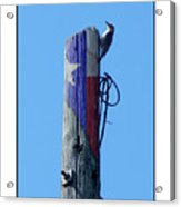#8667 Woodpecker Acrylic Print