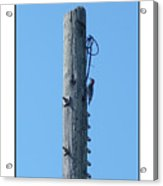 #866x Woodpecker Acrylic Print