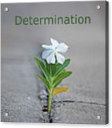 88- Determination Acrylic Print