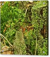 Mosses And Liverworts 8861 Acrylic Print