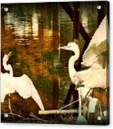 9 Egrets Acrylic Print