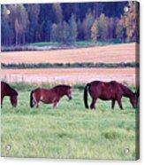 Horses Of The Fall Acrylic Print