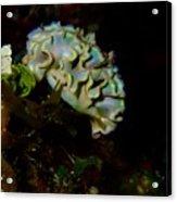 Lettuce Sea Slug Acrylic Print