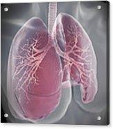Lungs Acrylic Print