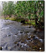 Middle Fork Of Williams River Acrylic Print