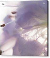 Pastel Purple Flowers Acrylic Print
