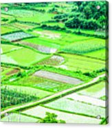 Rice Fields Scenery Acrylic Print