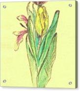 Sketches Acrylic Print
