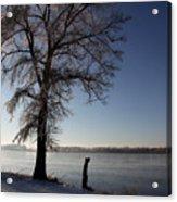 Trees In Ice Series Acrylic Print