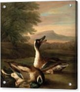 Two Drakes In Landscape Acrylic Print