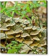 Polypores 9155 Acrylic Print