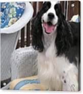 #940 D1036 Farmer Browns Springer Spaniel Happy For You Have A Happy Day Acrylic Print