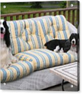 #940 D1084 Farmer Browns Separate But Always Together Acrylic Print