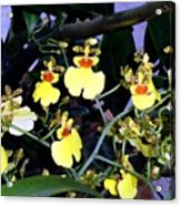 A Ballet Of Tiny Orchids Acrylic Print