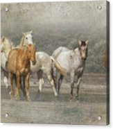 A Band Of Horses Acrylic Print