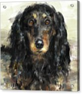 A Beautiful Artistic Painting Of A Dachshund  Acrylic Print