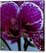 A Beautiful Flower Acrylic Print