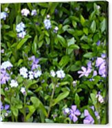 A Bed Of Blooms Acrylic Print