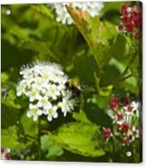 A Bee And A Fly Meet On A Flower Acrylic Print