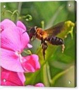 A Bee I Cee Acrylic Print