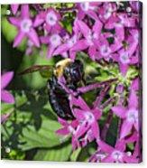 A Bee See Acrylic Print