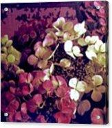 A Bevy Of Hydrangeas  Acrylic Print
