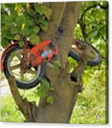 A Bike Growing In A Tree Acrylic Print