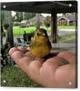 A Bird In The Hand Acrylic Print
