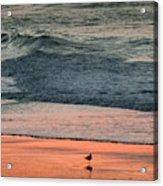 A Bird's Eye View Acrylic Print