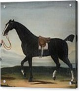 A Black Horse Held By A Groom Acrylic Print