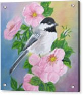 A Blackcapped Chickadee And Roses Acrylic Print