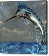 A Blue Marlin Flashes Its Iridescent Acrylic Print