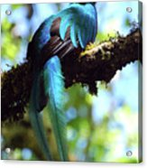 A Blue Stand Out Acrylic Print