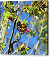 A Branch Standing Out From The Crowd Acrylic Print