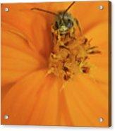 A Bugs Life Acrylic Print