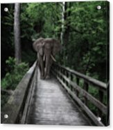 A Bull On The Boardwalk Acrylic Print