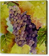 A Bunch Of Grapes Acrylic Print