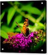 A Butterflies World  Acrylic Print
