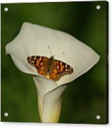 A Butterfly Lands Upon A Lily II Acrylic Print
