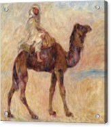A Camel Acrylic Print