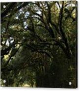 A Canopy Of Trees Acrylic Print