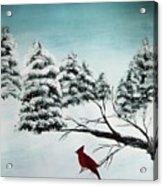 A Cardinals Perch Acrylic Print