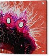 A Cats Mouth Acrylic Print