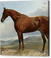 A Chestnut Hunter In A Landscape Acrylic Print