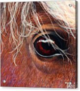 A Closer Look Acrylic Print