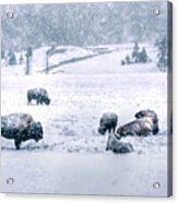 A Cold Winter's Day Acrylic Print